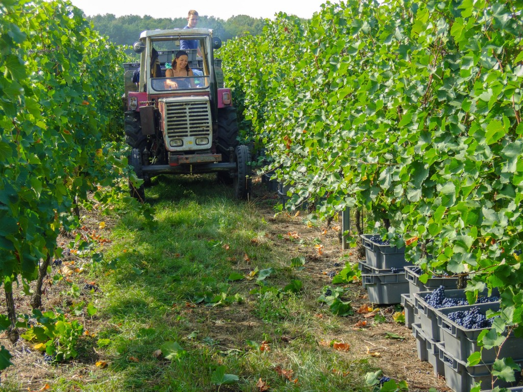 wine-957996_1920